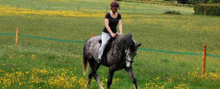 Livery-Woodlands-Horse